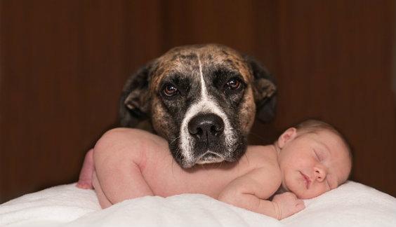 hund baby 564