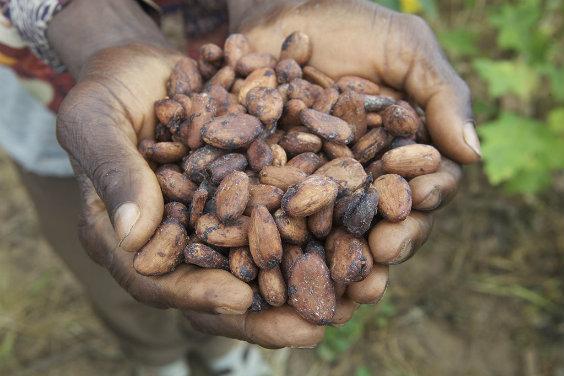 Cocoa Plan 564