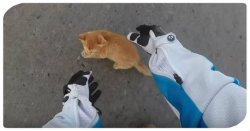 Motorradfahrerin rettet Katze