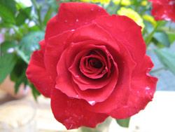 Auch eine Blume ist ein Glückwunsch zur Geburt