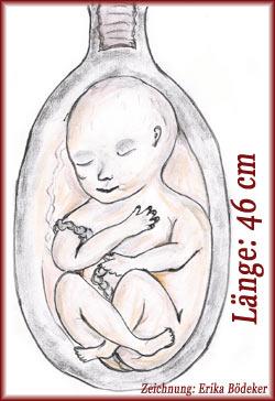 Schwangerschaft 36. Woche