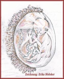 Fruchtblase und Plazenta