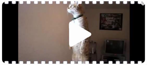 katzen videio