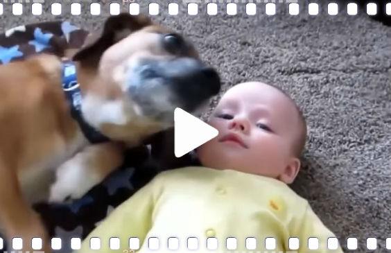video baby hund liebe n4 564