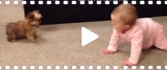 video baby hund sprechen 9z 564