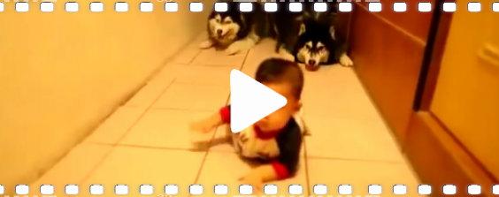 video baby hunde lehrt 564