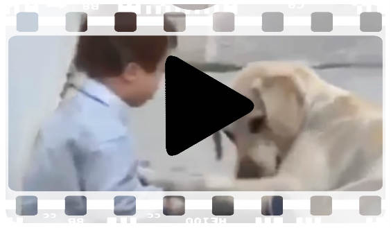 video hund down