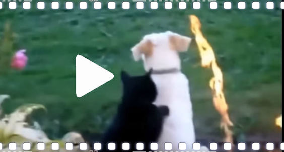 video katzen part 1 564